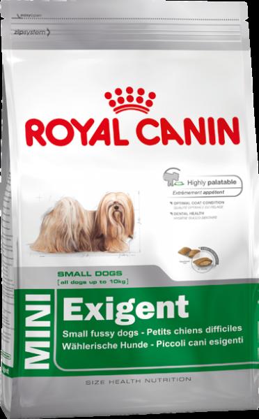 Mini Exigent (Hund)