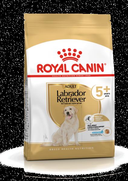 Labrador Retriever Adult 5+