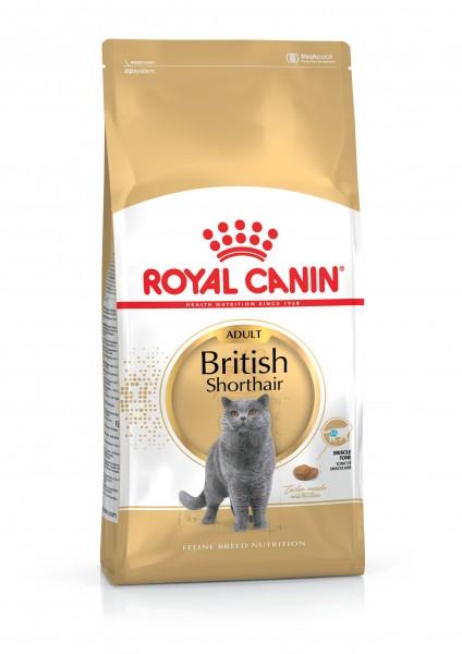 British Shorthair (Katze)