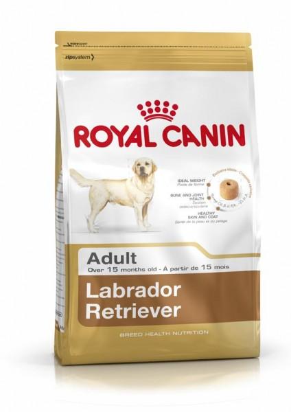 Labrador Retriever (Hund)