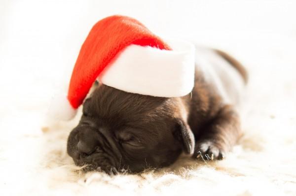 weihnachtsgewinn