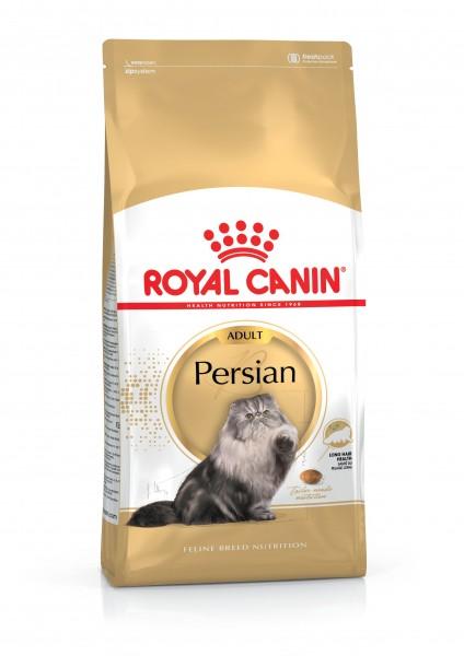 Persian (Katze)