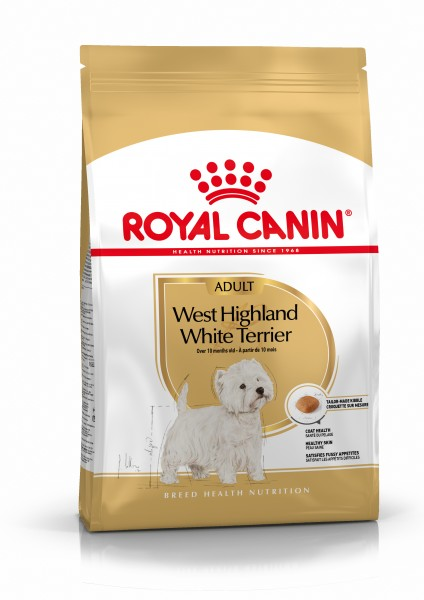 West Highland White Terrier (Hund)