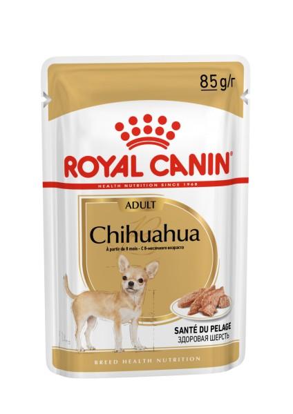 Chihuahua (Hund)