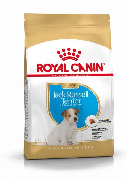 Jack Russel Terrier Puppy (Hund)