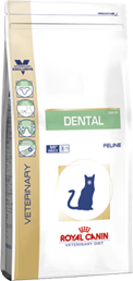 Dental (Katze)