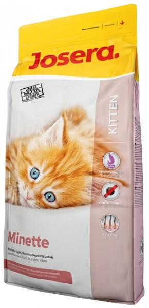Minette (Kitten)