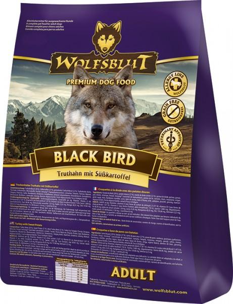 Black Bird Adult