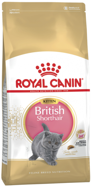 Kitten British Shorthair (Katze)