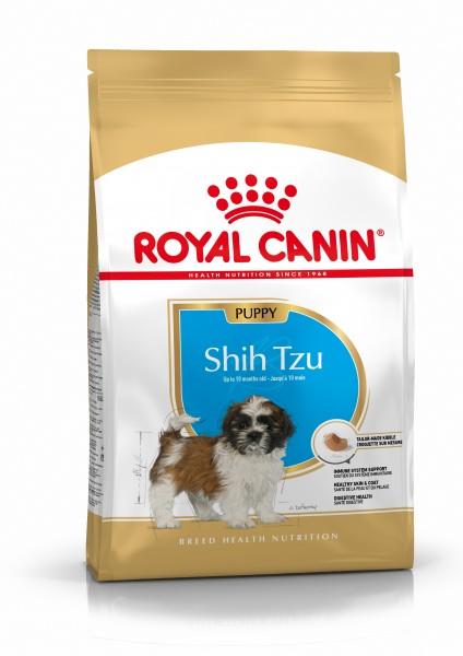 Shih Tzu Puppy (Hund)