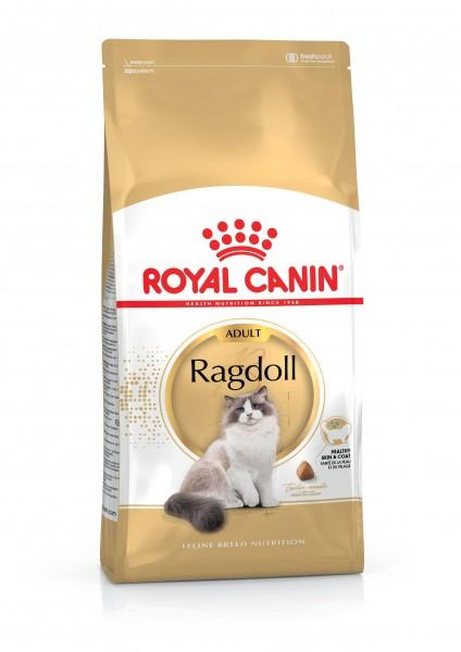 Ragdoll (Katze)