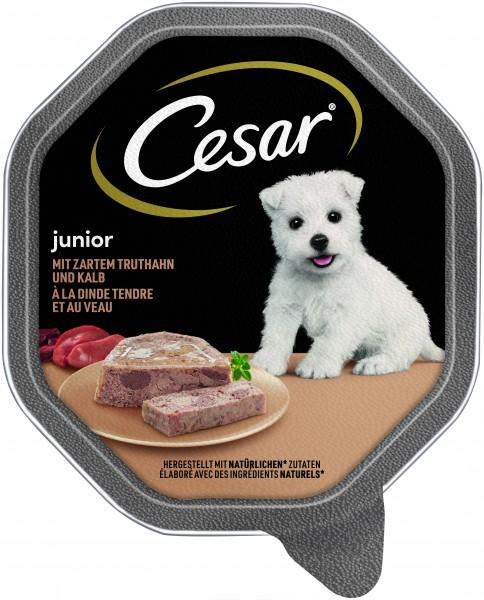 Cesar Junior mit zartem Truthahn und Kalb Schale