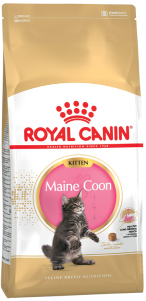 Kitten Maine Coon (Katze)