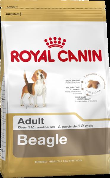 Beagle (Hund)